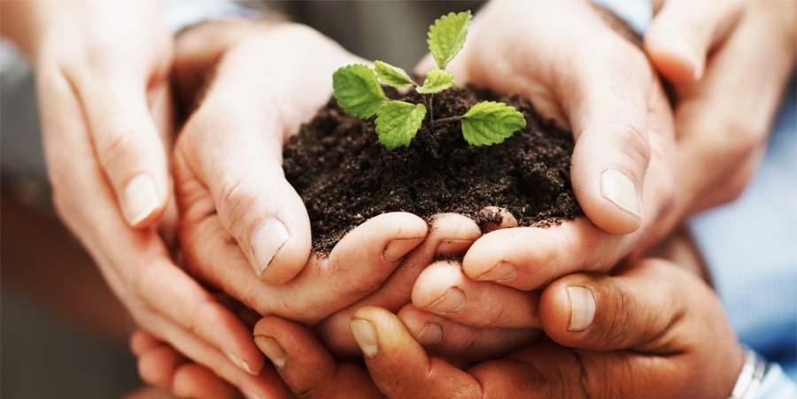 Naturologia para Corporações